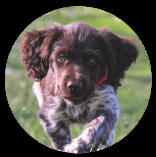 puppycircle