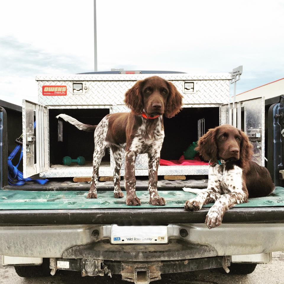 pup-truck